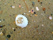 Shell 1 del mar Imagen de archivo