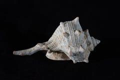 Shell del mar Fotos de archivo libres de regalías
