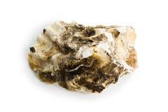 Shell del mar aislado en un fondo blanco fotografía de archivo