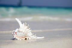 Shell del mar cerca con el océano Imagenes de archivo