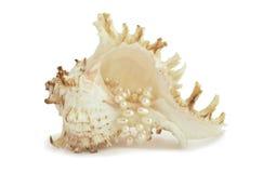 Shell del mar con el collar de la perla foto de archivo libre de regalías