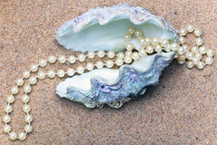 Shell del mar con las perlas adentro Fotografía de archivo