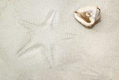 Shell del mar e impresión de las estrellas de mar en la arena Imagen de archivo