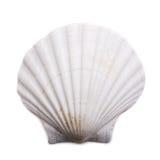 Shell del mar en el fondo blanco Foto de archivo libre de regalías