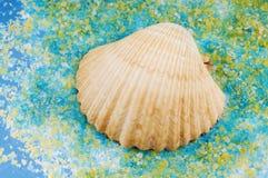 Shell del mar en granos de la sal. Fotos de archivo libres de regalías
