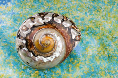 Shell del mar en granos de la sal. Fotografía de archivo libre de regalías