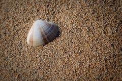 Shell del mar en la playa Fotografía de archivo libre de regalías