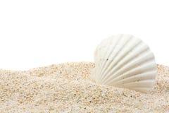 Shell del mar en la playa Imagenes de archivo