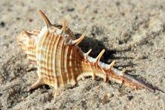 Shell del mar en la playa Foto de archivo