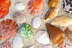 Shell del mar en las arenas Fondo del tiempo de verano imagen de archivo libre de regalías