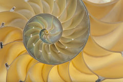 Shell del nautilus Imagenes de archivo