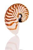 Shell del nautilus Fotografía de archivo libre de regalías