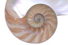 Shell del nautilus Fotos de archivo libres de regalías