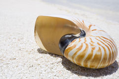 Shell del nautilus Foto de archivo libre de regalías