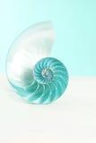 Shell del nautilus Imágenes de archivo libres de regalías