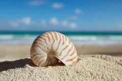 Shell del nautilus con el océano, la playa y el paisaje marino, dof bajo Fotos de archivo