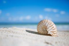 Shell del nautilus con el océano, la playa y el paisaje marino, dof bajo Imagen de archivo libre de regalías