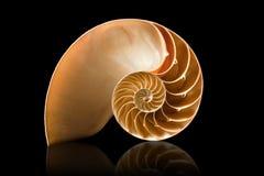 Shell del nautilus en fondo negro Fotos de archivo libres de regalías