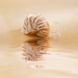 Shell del nautilus en la agua y la arena de mar de la ondulación Foto de archivo