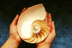 Shell del nautilus en manos Fotografía de archivo