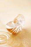 Shell del nautilus por completo del agua en arena de mar Foto de archivo libre de regalías