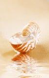 Shell del nautilus por completo del agua en arena de mar Imagenes de archivo