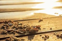 Shell der Erdnuss auf Holztisch Lizenzfreies Stockbild