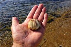 Shell in der Hand lizenzfreie stockfotografie