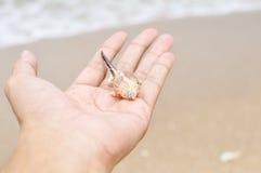 Shell in der Hand Stockbilder