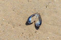 Shell des moules dans la fin de sable  photo libre de droits