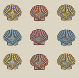 Shell deseniuje Obraz Royalty Free