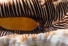 Shell Detail Stockfotografie