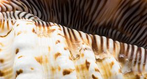 Shell Detail Lizenzfreies Stockbild