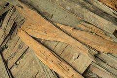 Shell di legno Immagini Stock