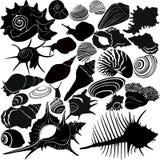 Shell di una lumaca illustrazione vettoriale