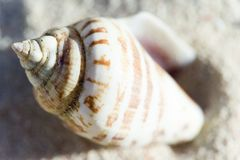 Shell die op het strand beëindigt Stock Fotografie