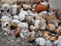 Shell died. Close up many shell died royalty free stock photo