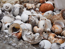 Shell died. Close up many shell died royalty free stock photos