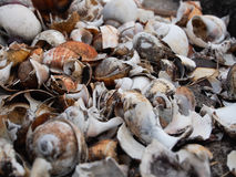 Shell died. Close up many shell died stock image