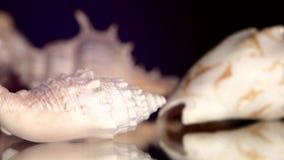 Shell diferentes do mar no preto, rotação vídeos de arquivo