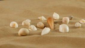 Shell diferentes na areia da praia, rotação do mar vídeos de arquivo