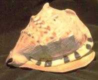 Shell do búzio de HDR para trás Imagens de Stock