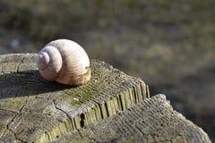 shell do caracol em um coto do carvalho imagens de stock