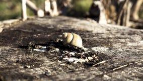 Shell do caracol em um log Foto de Stock