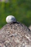 Shell do caracol em um tronco de árvore Imagem de Stock Royalty Free