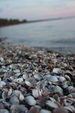 Shell do lago Imagem de Stock Royalty Free
