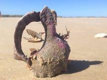Shell do mar Fotos de Stock