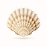 Shell do mar Foto de Stock
