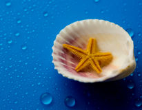 Shell do mar Fotografia de Stock Royalty Free