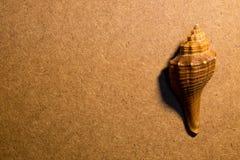 Shell do mar Fotografia de Stock
